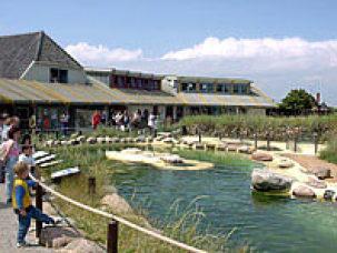 Becken der Seehundstation Friedrichskoog